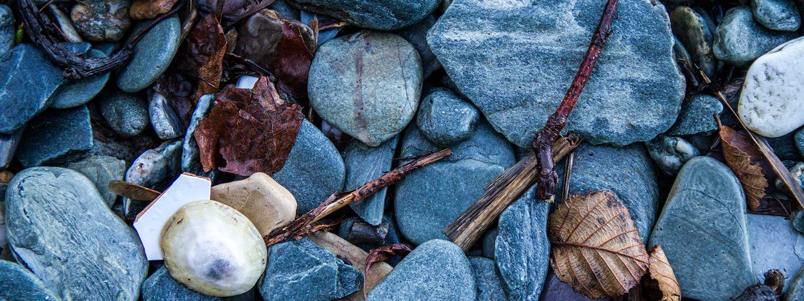 west-coast-media-beach-shell-pebbles